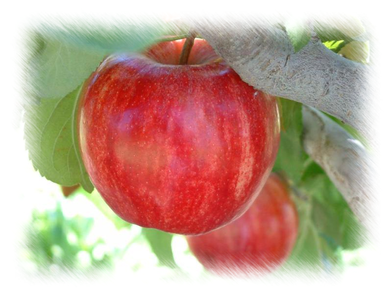 Starkrimson Apple